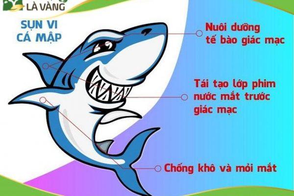 Sụn vi cá mập